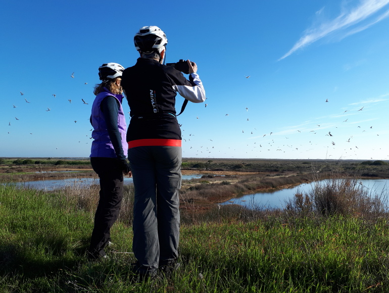 cycling, birdwatching, ria formosa natural park